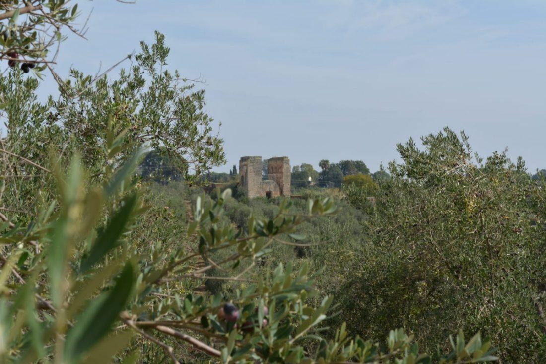 AionSur convento-santa-eulalia-marchena El convento de Santa Eulalia de Marchena entra en la lista roja de peligro de desaparición Cultura Marchena