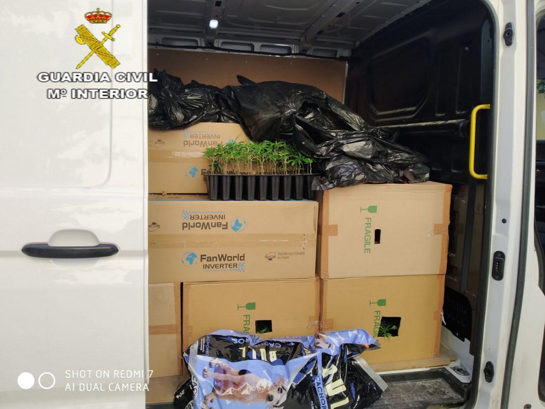 AionSur fotografía-compressor Interceptado en Marchena un vehículo con 2.747 plantones de marihuana Marchena Sucesos