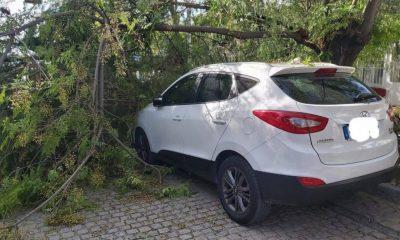 AionSur 00afdc15-6e62-4ed0-9928-fdc241a7df42-compressor-400x240 Una avenida de Arahal, más de hora y media cortada por la caída de la rama de un árbol Arahal Sucesos