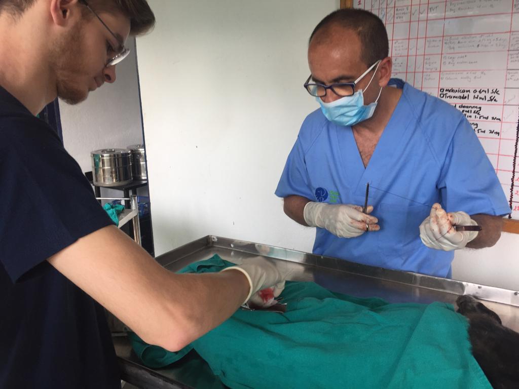 AionSur 43cfab29-75cb-4e1f-9ab0-9170df641112-compressor De Morón a Nepal, un viaje para vacunar contra la rabia a cientos de perros Morón de la Frontera Sociedad  destacado