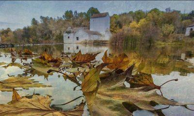 AionSur 73495299_2818340644877439_529234163794968576_o-400x240 El Ayuntamiento de Alcalá denuncia un nuevo vertido al río  Guadaíra Alcalá de Guadaíra  destacado