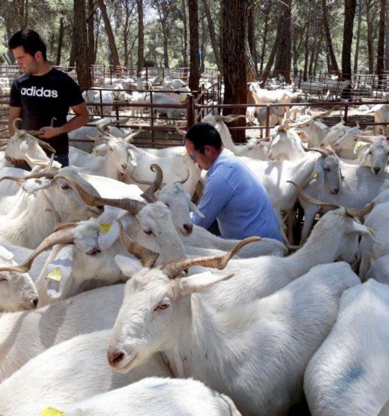 AionSur escuela-pastores-1-compressor-560x600 La Escuela de Pastores andaluza, reconocida a nivel nacional como modelo de los Programas de Desarrollo Rural Agricultura Andalucía Educación