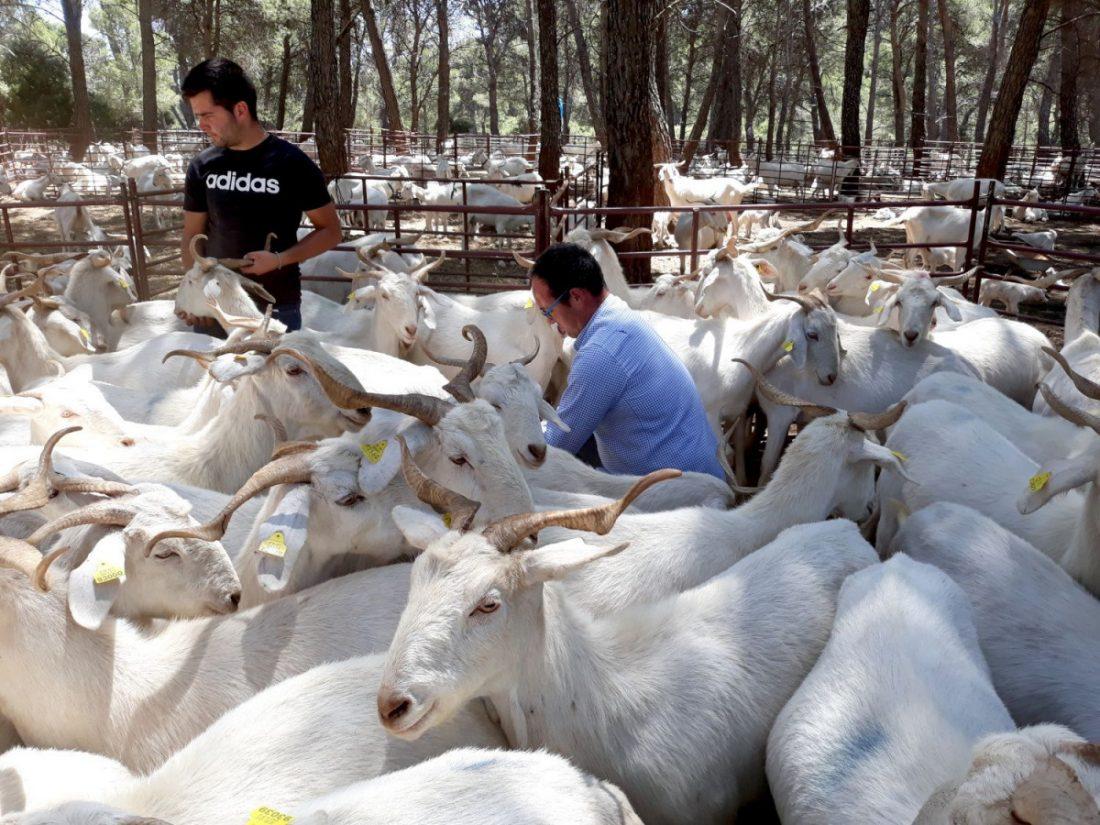 AionSur escuela-pastores-1-compressor La Escuela de Pastores andaluza, reconocida a nivel nacional como modelo de los Programas de Desarrollo Rural Agricultura Andalucía Educación