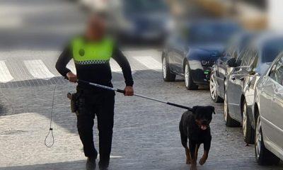 AionSur 81115745_2199720803665497_3937863288146100224_n-compressor-400x240 Policía de Osuna resulta herido al intentar atrapar a un perro peligroso suelto en una zona infantil Osuna Sucesos