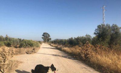 AionSur IMG_2775-compressor-400x240 El TSJA avala de nuevo el rechazo ecologista a la legalización de viviendas irregulares en Arahal en zona de Especial Protección Arahal  destacado