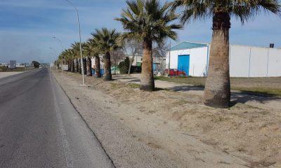 AionSur 4fe53554-b3d4-4676-b666-5442330fa904-compressor-400x240 El Ayuntamiento de Marchena poda y limpia casi 400 palmeras Marchena