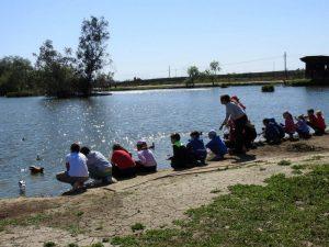AionSur aves-protegidas-4-300x225 ¿Sabías que Sevilla tiene una de las reservas de aves más importantes de España? Naturaleza Provincia