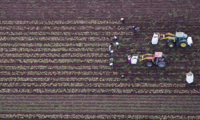 AionSur 1-compressor-400x240 Fallado el concurso de fotografía 'Medio Rural en Andalucía 2019' con 673 trabajos de 108 personas Agricultura Cultura Economía