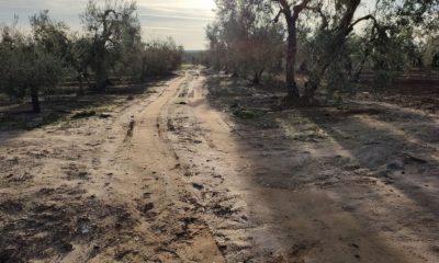 AionSur a7d2a491-35d2-401f-9d00-038740cc2421-compressor-400x240 Arahal, Paradas y Marchena entran en el Plan Itínere para el arreglo de caminos rurales Campiña Morón y Marchena