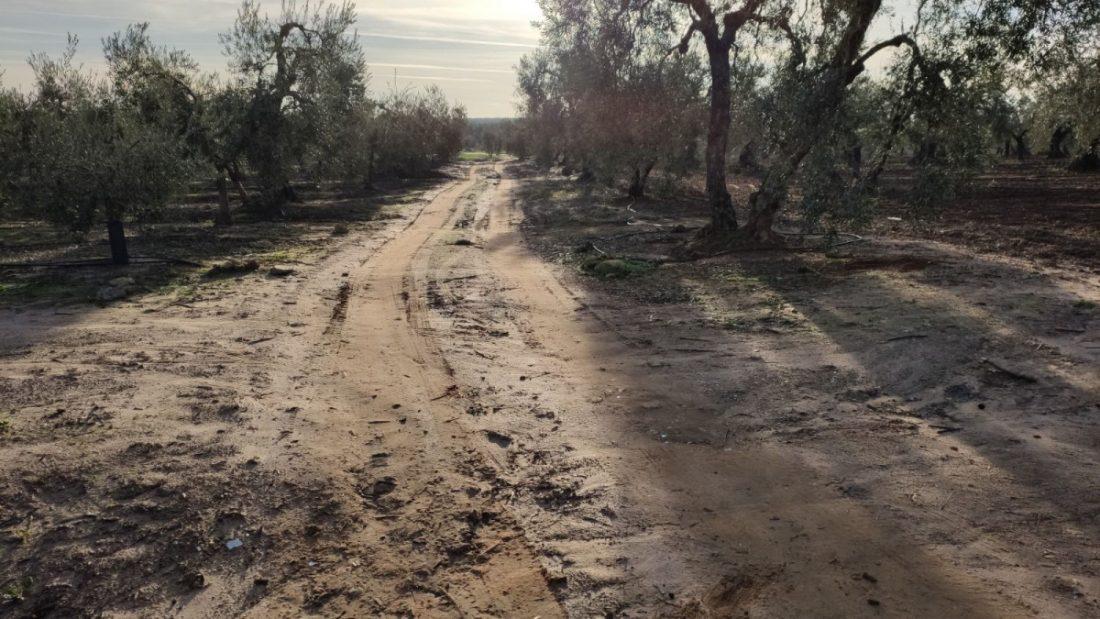 AionSur a7d2a491-35d2-401f-9d00-038740cc2421-compressor Arahal, Paradas y Marchena entran en el Plan Itínere para el arreglo de caminos rurales Campiña Morón y Marchena