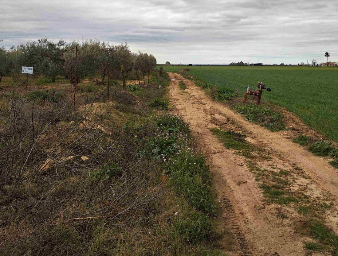 AionSur camino-rural-CARMONA Carmona pide ayuda a la Junta para arreglar sus caminos rurales Carmona