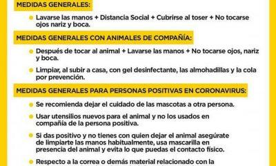 AionSur anmales-de-compañía-400x240 Abandono de animales: un delito que puede multiplicarse después del confinamiento Animales Coronavirus