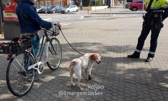 AionSur perro-Sevilla-1-590x354 La sorprende la Policía con su perro cojo atado a la bici para pasear por Sevilla Coronavirus Sevilla  destacado