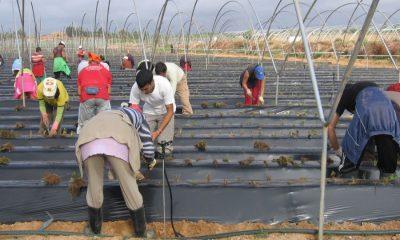AionSur e346f0f8-2de5-4c41-b6b5-11aa607cf84d-compressor-400x240 Empleo: Se necesitan 400 personas para trabajar en la campaña de arándanos y frambuesas Formación y Empleo Huelva  destacado