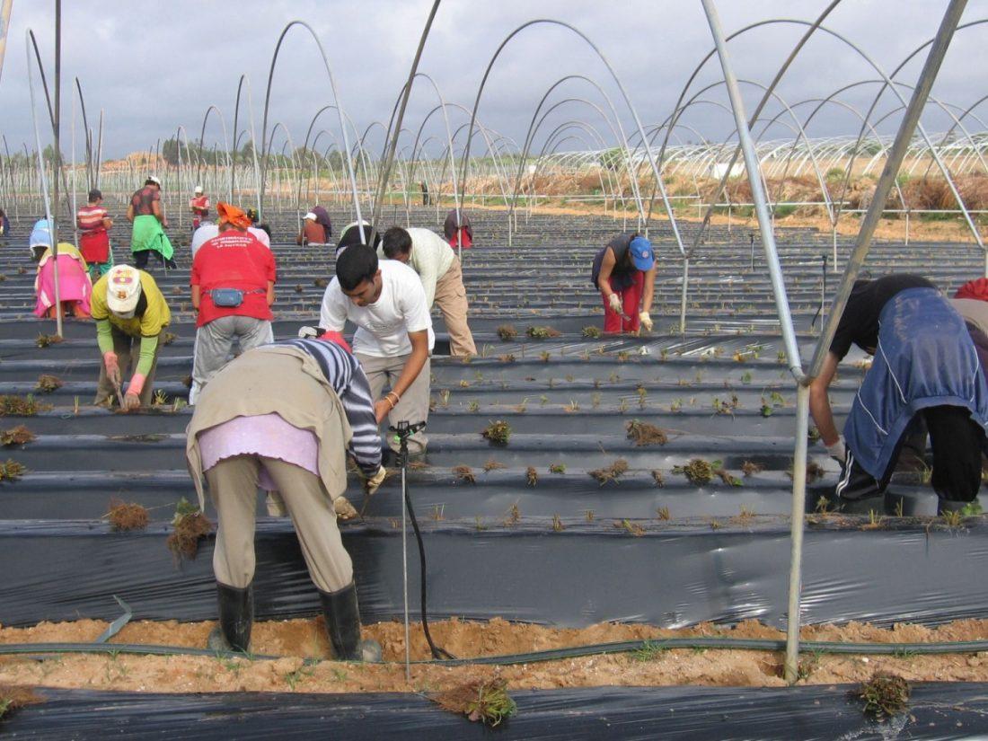 AionSur e346f0f8-2de5-4c41-b6b5-11aa607cf84d-compressor Empleo: Se necesitan 400 personas para trabajar en la campaña de arándanos y frambuesas Formación y Empleo Huelva destacado