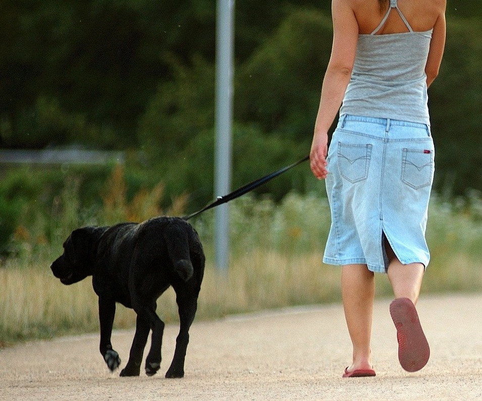 AionSur: Noticias de Sevilla, sus Comarcas y Andalucía perro-paseo Los vecinos de Gerena solo podrán recorrer 50 metros con sus mascotas Coronavirus Gerena