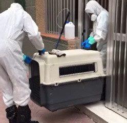 AionSur protectora-248x240 ¿Cómo afecta el estado de alarma a los animales? Animales Coronavirus