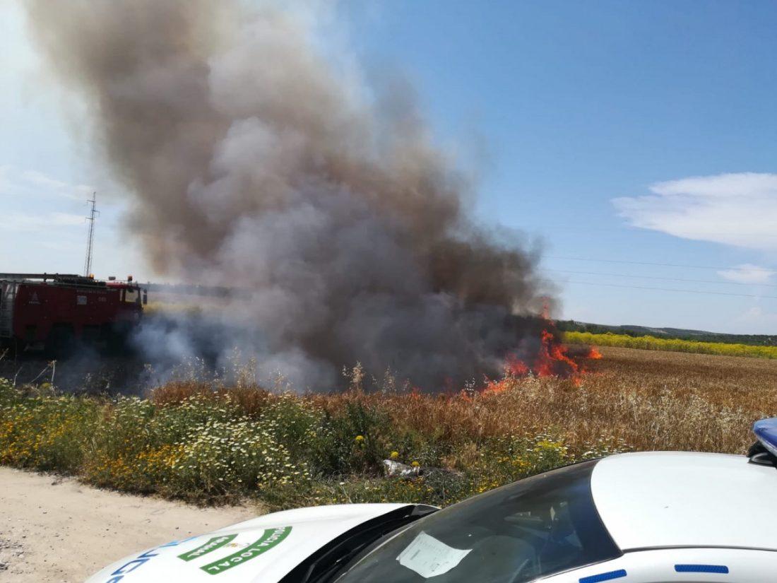 AionSur 6d17dc61-5b41-4cc3-97e3-55e1241a7ff5 Registrado un incendio en un campo de trigo junto a la Vereda de Sevilla en Arahal Arahal Sucesos