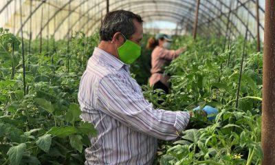 AionSur IMG_8177-1-400x240 El confinamiento y la Huerta del Rosario: la lucha por mantener lo tradicional Agricultura Arahal destacado