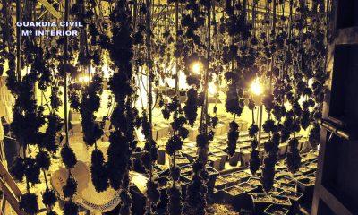 AionSur Marihuana-guillena-400x240 Un detenido en Guillena por cultivar marihuana en una nave industrial Guillena Narcotráfico Sucesos