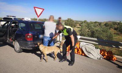 AionSur Policia-El-Saucejo-control-400x240 Los paran en un control y llevaban 200 kilos de naranjas robadas, drogas y armas blancas El Saucejo Sucesos