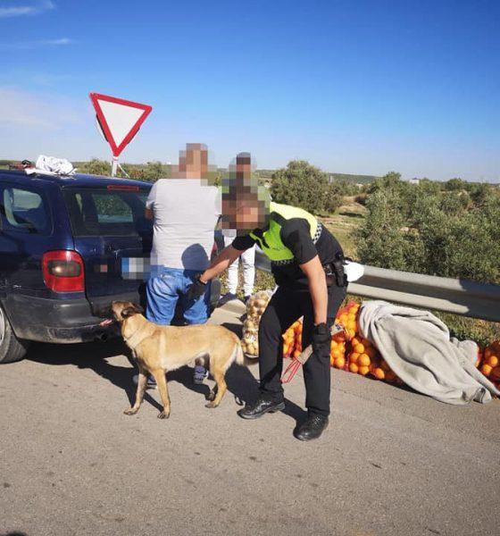 AionSur Policia-El-Saucejo-control-560x600 Los paran en un control y llevaban 200 kilos de naranjas robadas, drogas y armas blancas El Saucejo Sucesos