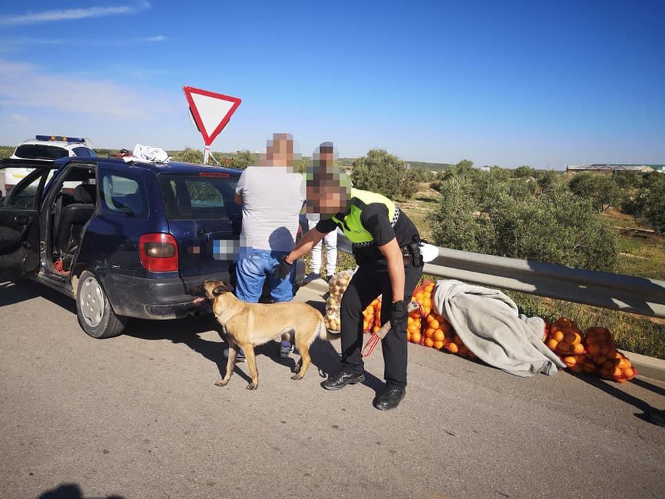 AionSur: Noticias de Sevilla, sus Comarcas y Andalucía Policia-El-Saucejo-control Los paran en un control y llevaban 200 kilos de naranjas robadas, drogas y armas blancas El Saucejo Sucesos