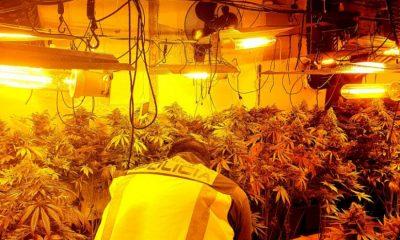 AionSur marihuana-dos-hermanas-400x240 Desmantelan una plantación de marihuana en Dos Hermanas con más de 300 plantas Dos Hermanas Narcotráfico Sucesos