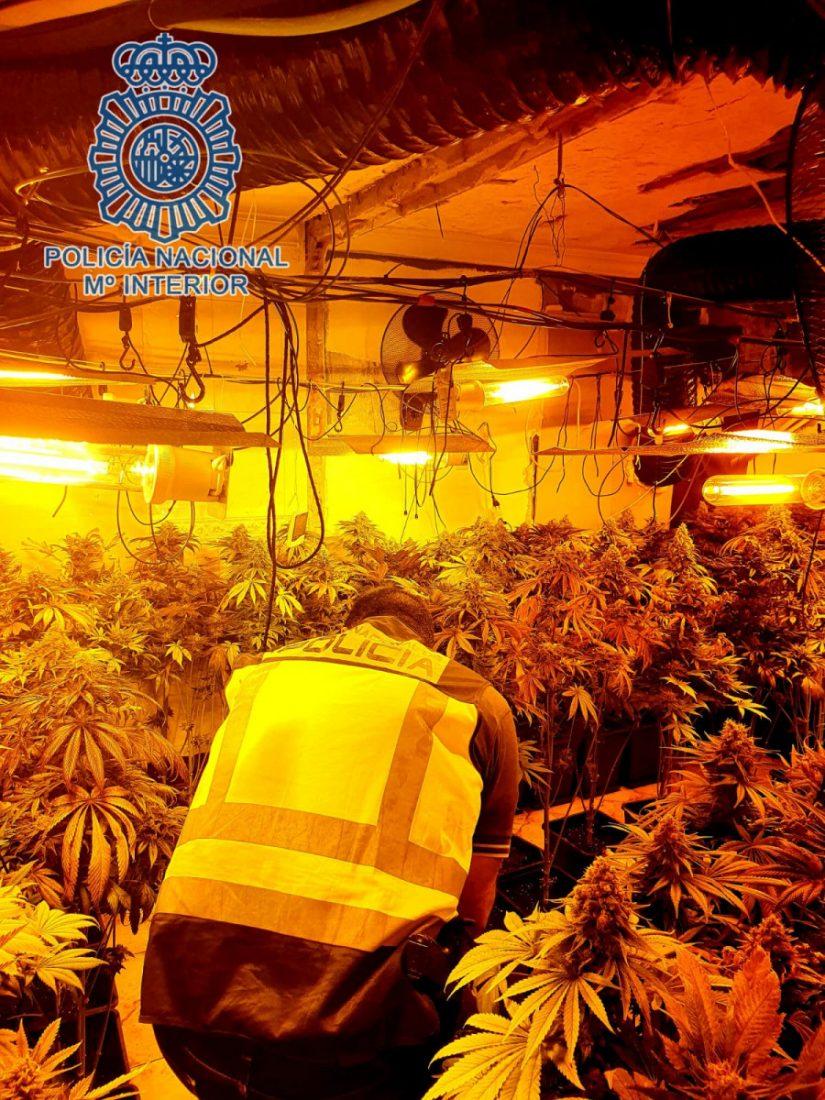 AionSur marihuana-dos-hermanas Desmantelan una plantación de marihuana en Dos Hermanas con más de 300 plantas Dos Hermanas Narcotráfico Sucesos