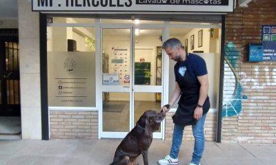 AionSur peluqueria-perros-400x240 Una peluquería canina sevillana se ofrece a lavar gratis a los perros guía Sevilla Sociedad