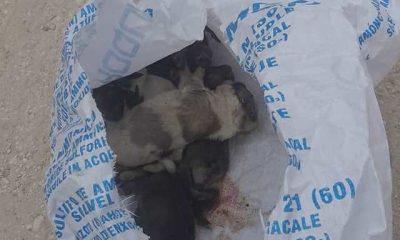 AionSur: Noticias de Sevilla, sus Comarcas y Andalucía 105702883_1681889878629327_2361313291892610578_o-min-400x240 Una protectora de Paradas denuncia la muerte de cinco cachorros abandonados en un saco cerrado Animales Naturaleza destacado