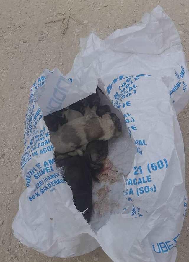 AionSur 105702883_1681889878629327_2361313291892610578_o-min Una protectora de Paradas denuncia la muerte de cinco cachorros abandonados en un saco cerrado Animales Naturaleza destacado