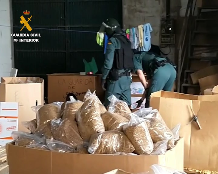 AionSur 2020-06-18_Op_Mustig_02-min Desmantelada una fábrica clandestina de tabaco de liar en el Aljarafe Sevilla Sucesos