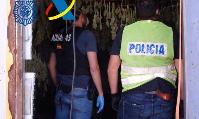 AionSur 32940c71-d063-4a4a-93a6-899a98364c3f-400x240 Desarticulado un grupo criminal dedicado al cultivo interior y exterior de marihuana en Carmona Alcalá de Guadaíra Carmona Sucesos destacado