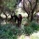 AionSur: Noticias de Sevilla, sus Comarcas y Andalucía Caballos-Guadiamar-80x80 Denuncian que unos caballos llevan un año atados por las patas Animales Naturaleza Provincia