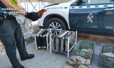 AionSur FOTOGRAFIA-min-400x240 La Guardia Civil impide una pelea de gallos clandestina en Casariche e identifica a 17 personas con múltiples antecedentes Casariche Sierra Sur Sucesos