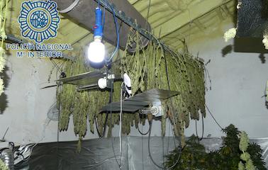 AionSur Marihuana-dos-Hermanas-378x240 Desmantelada una plantación de marihuana en el interior de un domicilio de Dos Hermanas Dos Hermanas Narcotráfico Sucesos destacado