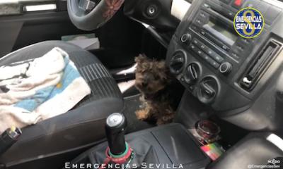 AionSur perro-rescate-400x240 La Policía rescata a un perro al que su dueña dejó cuatro horas en el coche al sol en Sevilla Sevilla Sucesos