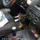 AionSur perro-rescate-80x80 La Policía rescata a un perro al que su dueña dejó cuatro horas en el coche al sol en Sevilla Sevilla Sucesos
