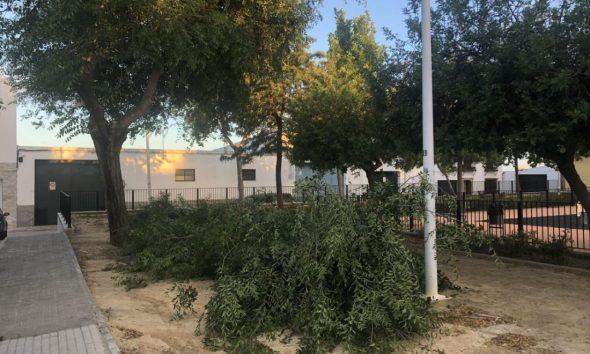 AionSur unnamed-590x354 El viento provoca la caída de varias ramas de árboles en Arahal Arahal Sucesos  destacado