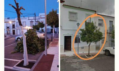 AionSur 50-de-descuento-en-todos-los-artículos-del-24l-26-de-junio-Código_-LIGOS50-400x240 El Ayuntamiento de Arahal investiga la poda ilegal de un naranjo de la vía pública Arahal