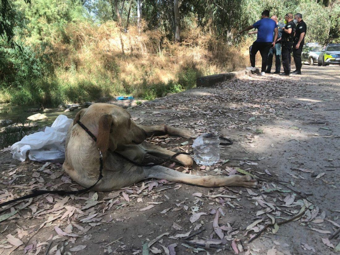 AionSur IMG_1883-min Investigado un vecino de Arahal por presunto maltrato a tres galgos, dos de ellos muertos Animales Arahal Naturaleza destacado