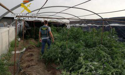 AionSur Marihuana-El-cuervo-400x240 Seis detenidos y desarticulada una red de venta de marihuana desde El Cuervo Narcotráfico Sucesos