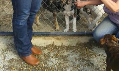 AionSur animales-400x240 Protectoras de Sevilla piden acceso a los animales de la pareja asesinada en Dos Hermanas para cuidarlos Dos Hermanas Sucesos