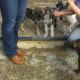 AionSur animales-80x80 Protectoras de Sevilla piden acceso a los animales de la pareja asesinada en Dos Hermanas para cuidarlos Dos Hermanas Sucesos