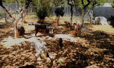 AionSur: Noticias de Sevilla, sus Comarcas y Andalucía animales-protectora-400x240 Los animales de la pareja asesinada en Dos Hermanas son atendidos por voluntarios Dos Hermanas Sociedad Sucesos