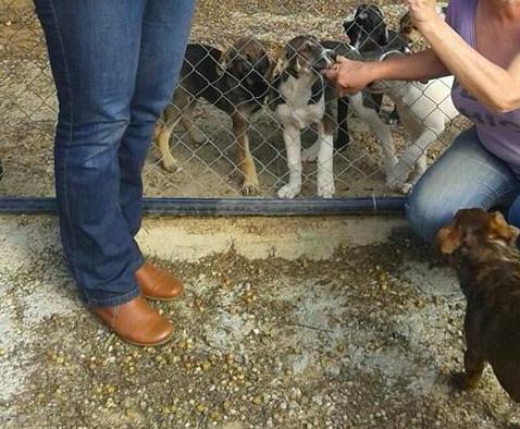 AionSur animales Protectoras de Sevilla piden acceso a los animales de la pareja asesinada en Dos Hermanas para cuidarlos Dos Hermanas Sucesos