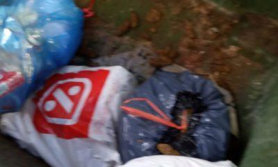 AionSur fb024711-575c-41eb-9572-d2ea90870486-min-400x240 Denuncia que unos contenedores de Arahal son usados para verter excrementos de perros y enseres Arahal destacado