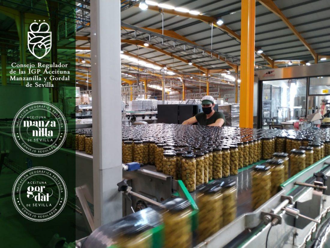 AionSur foto-igp-manzanilla-gordal-de-sevilla-NP-min La IGP Manzanilla y Gordal cierra el plazo de inscripción para las industrias envasadoras y centros de compra Sevilla