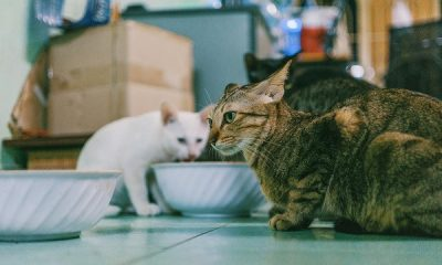 AionSur gatos-400x240 La COVID-19 deja al descubierto la falta de políticas públicas de protección de los animales Sociedad